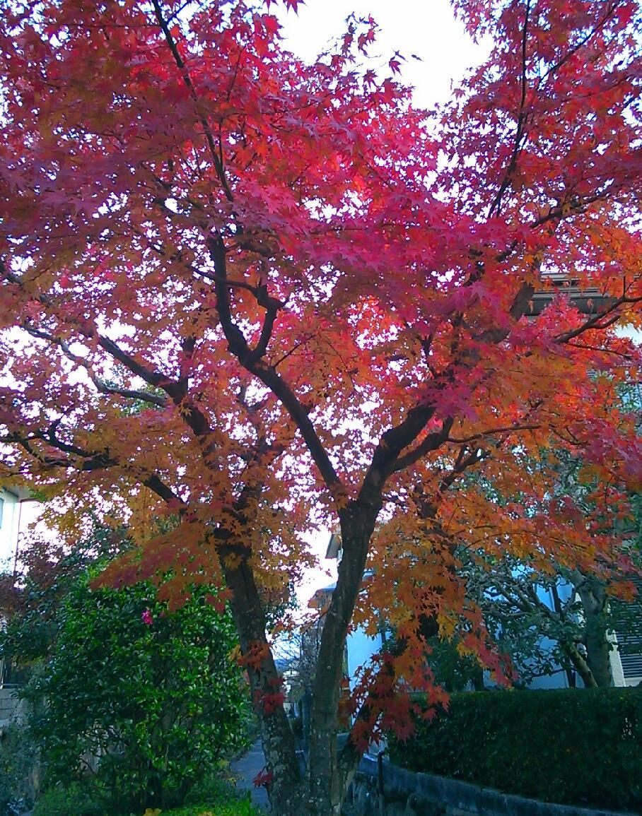今年の紅葉はきれいだ